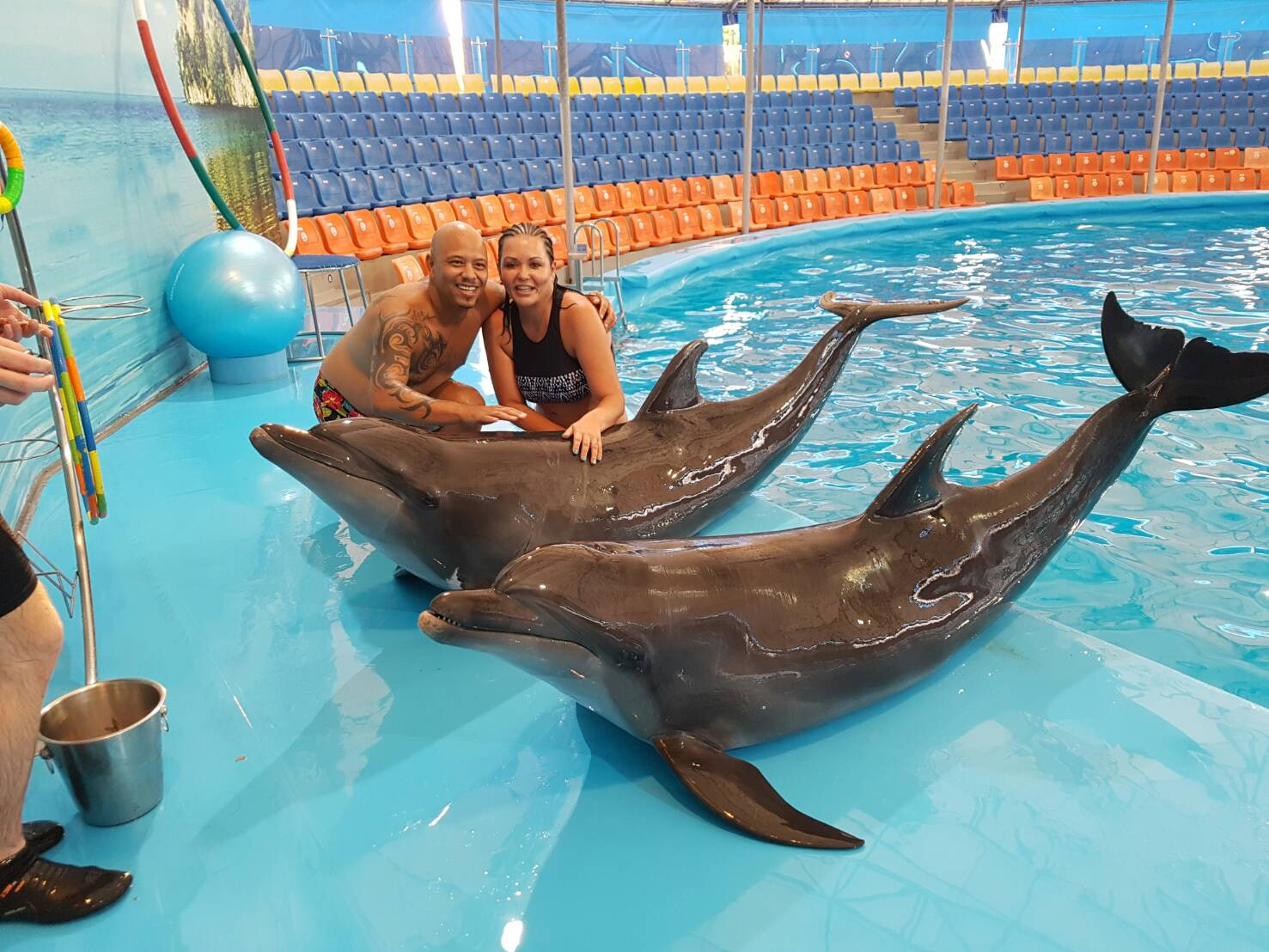 Phuket Dolphins & Sea Lion Shows