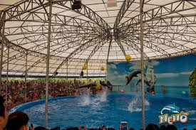 Phuket-Dolphins-Sea-Lion-Shows