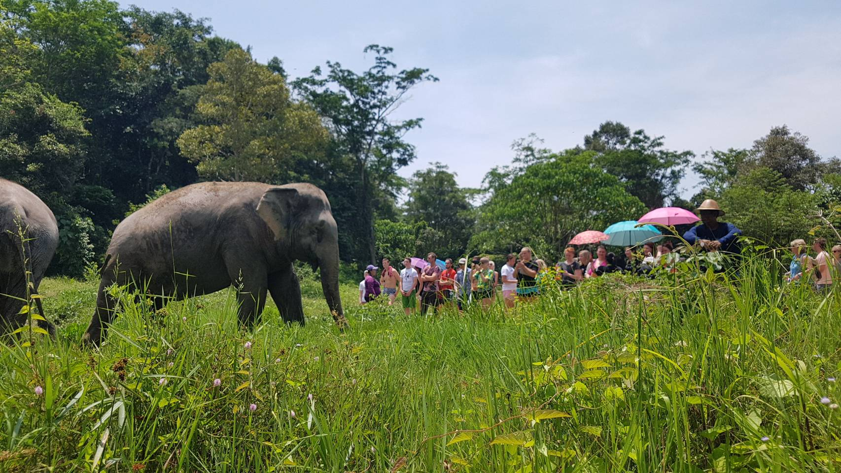 Phuket Elephant Sanctuary